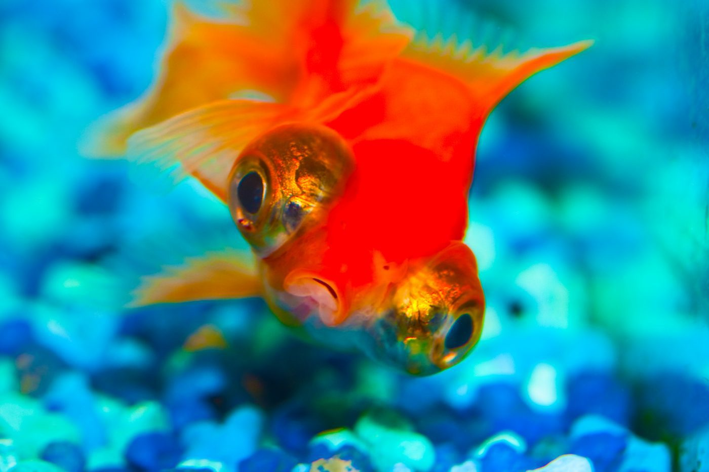 Control Your Fish Tank with an App and Keep Fish Happy
