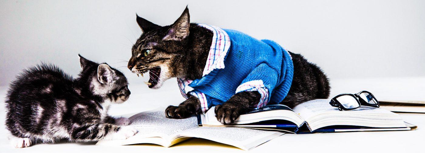 Found-Animals-cats-manipulation-working-arguments-invalid-bad-malicious-nefarious-fighting_edited