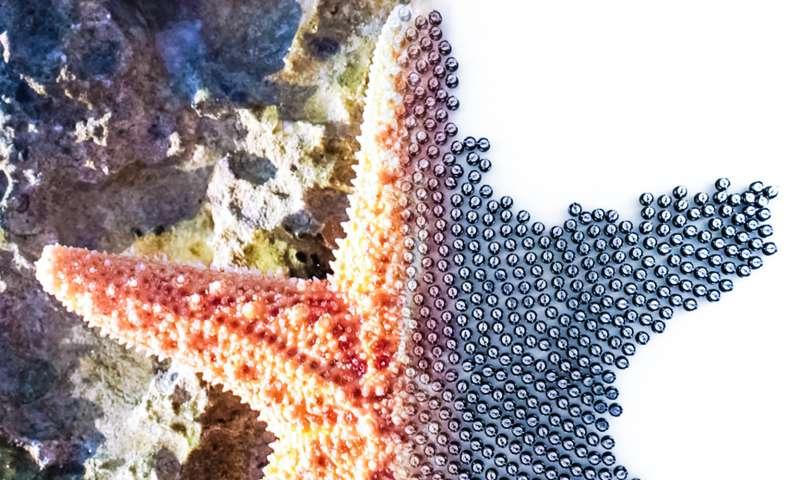 single cells assemble complex multicellular organisms Kilobots autonomously assemble predetermined shapes vast scale swarm milestone