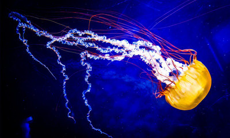 Deepsea Deep Sea Diving Photography Jellyfish Blue Dark How Video Educational Info