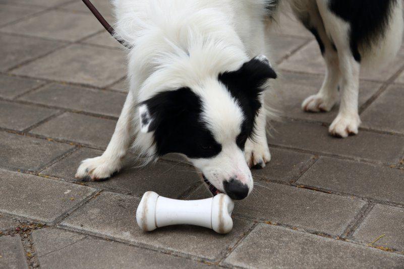 Wickedbone Dog Toy Startup Gadget