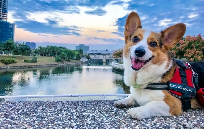 Petfon GPS Tracker Lost Pets Stolen Dogs No Monthly Costs