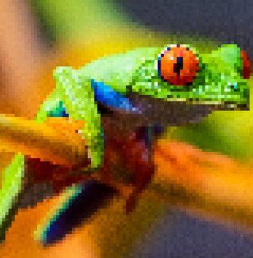 TecoGAN Increasing Media Resolution without Losing Details Video Pixelated