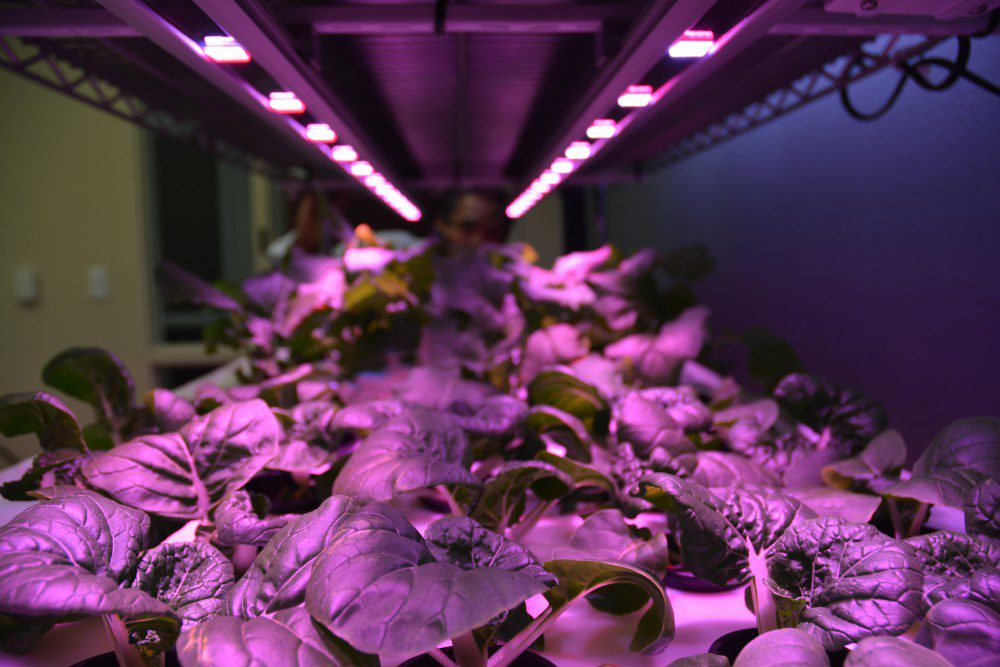 plant lights GreenTech Agro is working with Texas AM AgriLife Research and Extension Center in Dallas to establish vertical farms - Vegetable and fruit production indoors