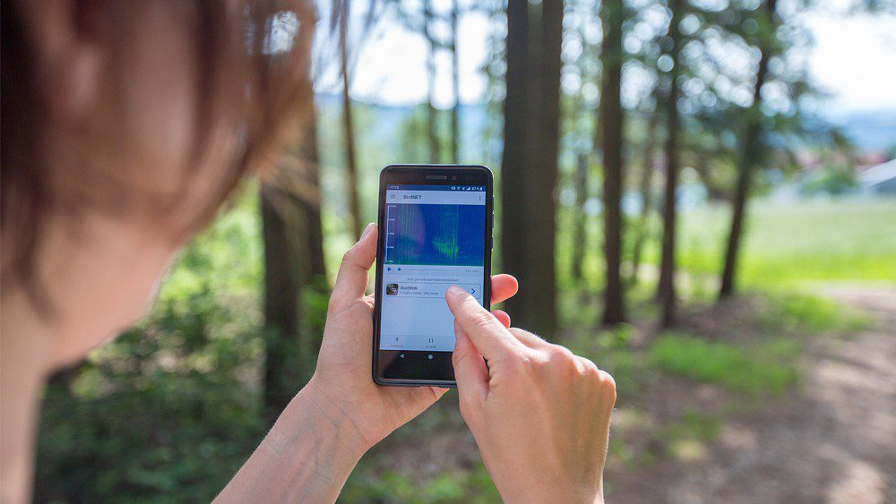 BirdNET App To Identify Birds With Recorded Sound Hiking Strolling Outside Nature Animal Calls