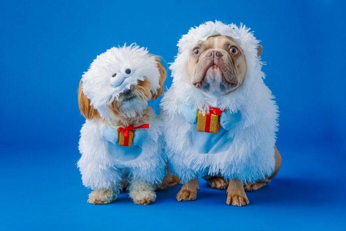 Funny Dogs Dressed Up Sheep Costume Doggos Neverthink Animal Video Binging App