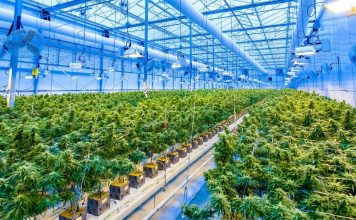 Cannabis Tech - A Growing Industry Invested in Medicine and Recreation