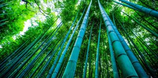 Studies Reveal Health Hazards of Bamboo-Ware Crockery